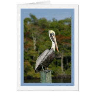 Pelican on Blue Greeting Card