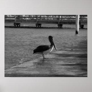 Pelican on Dock - Black & White Poster