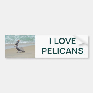 Pelican on Outer Banks OBX NC Bumper Sticker