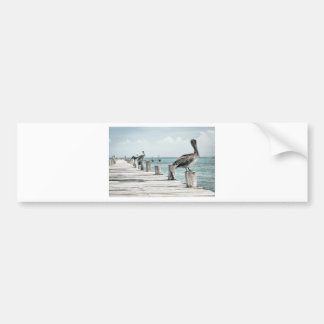 Pelican on Pier Bumper Sticker