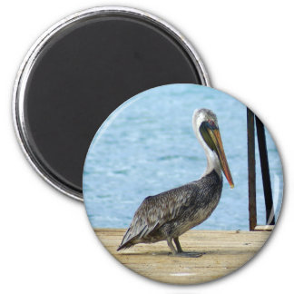 Pelican on the pier, Curacao, Caribbean Islands Magnet