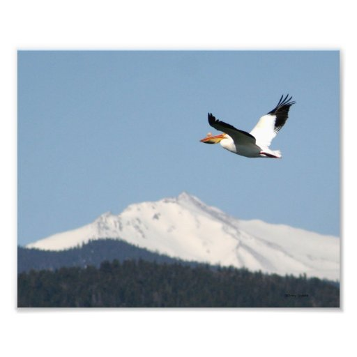 Pelican Over Rockies Photo Print