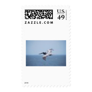 PELICAN OVER ST. GEORGE ISLAND POSTAGE