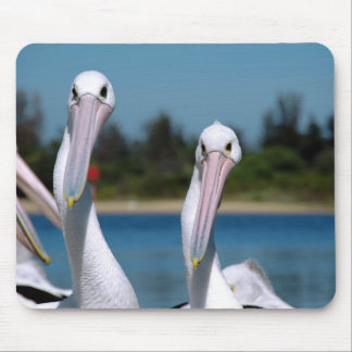 Pelican Pair Mouse Pad