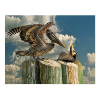 Pelican Parodies Florida Wildlife Postcard
