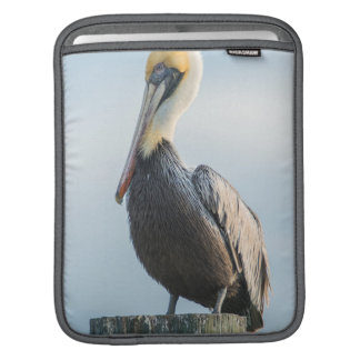 Pelican perched on pylon sleeve for iPads