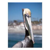 Pelican Photo Print