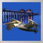 Pelican Pier Posters