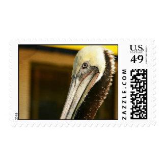 Pelican Portrait Postage