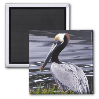 Pelican Poser 2 Inch Square Magnet