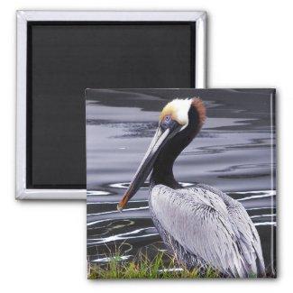 Pelican Poser magnet