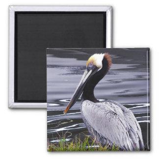 Pelican Poser Fridge Magnets