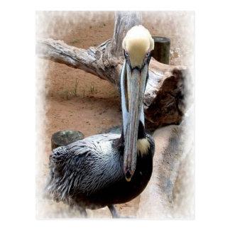 Pelican Post Cards