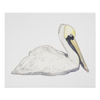 Pelican Posters & Prints