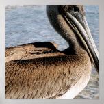 Pelican Print