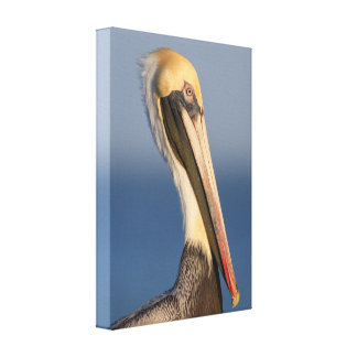 Pelican Profile Gallery Wrapped Canvas