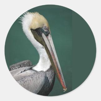 Pelican Round Sticker