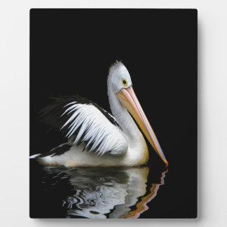 pelican sea birds enjoy peace in dark plaques