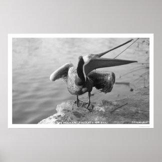Pelican Showing Off Alaska 1918 Poster
