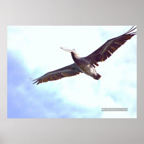 Pelican Soars Print