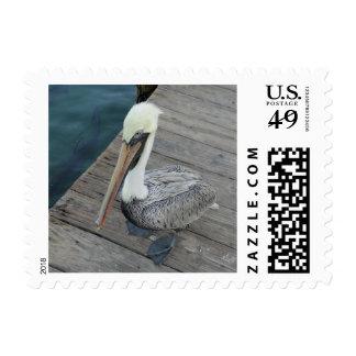 Pelican Stamp