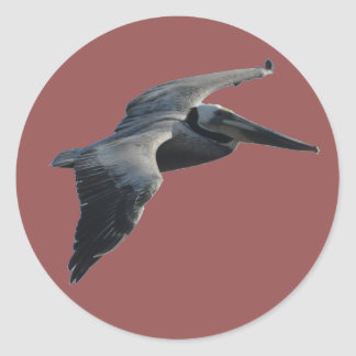 Pelican Sticker