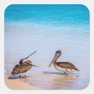 Pelican Stickers
