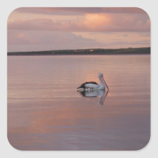 pelican sunset at Doctor's Beach South Australia Square Sticker