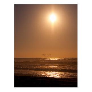 Pelican Sunset Horsfall Beach, Oregon Postcard