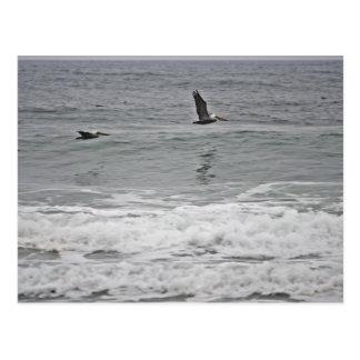 Pelican Trio at Horsfall Beach, Oregon Postcard