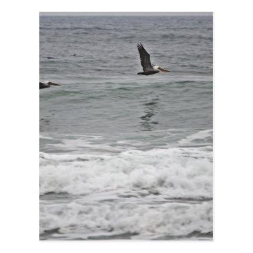 Beach Themed Pelican Trio at Horsfall Beach, Oregon Postcard