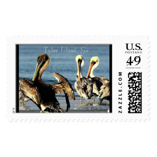 Pelican Trio Postage Stamps
