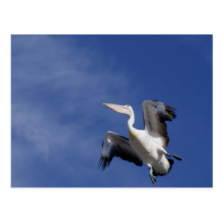 Pelican Up Up and Away Postcard