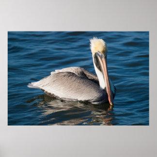 Pelican Watching Poster