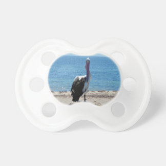 Pelican With The Look, Pacifier