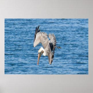 Pelican Zoning In Print