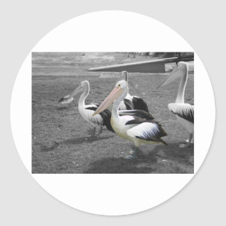 Pelícano amistoso pegatina redonda