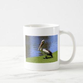 Pelícano australiano a lo largo del río Torrens Tazas De Café
