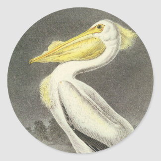 Pelícano blanco americano, Juan Audubon Etiquetas Redondas