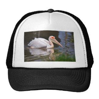 Pelícano blanco en el agua gorras
