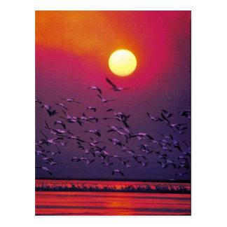 Pelícano blanco en neblina tarjeta postal