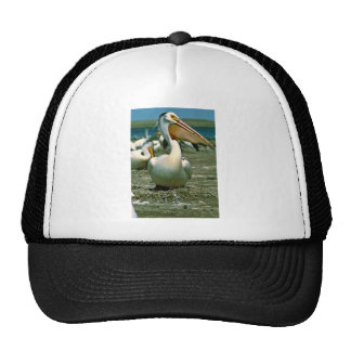 Pelícano blanco gorro