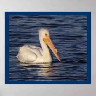 Pelícano blanco - retrato lateral impresiones