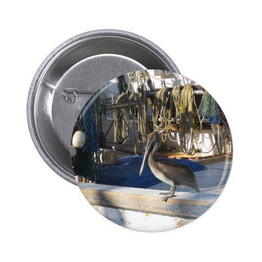 Pelícano de Apalachicola a bordo Pins