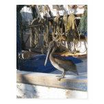 Pelícano de Apalachicola a bordo Tarjetas Postales