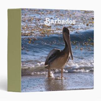 Pelícano de Barbados Brown