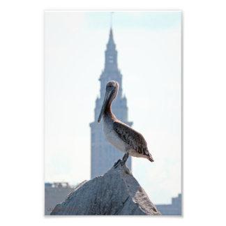 Pelícano de Brown con la torre terminal en Clevela Arte Fotografico