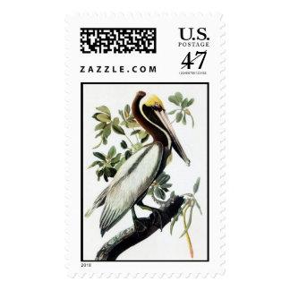 Pelícano de Brown de Audubon Estampilla