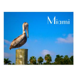 Pelícano de Brown en Miami - postal