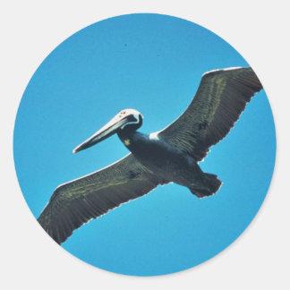 Pelícano de Brown en vuelo Pegatina Redonda